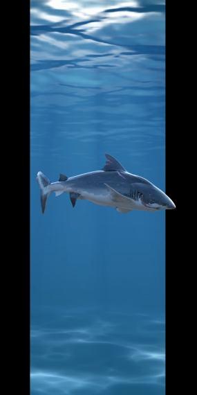 鲨鱼鳄鱼出屏裸眼3d竖屏含单独动物PNG视频素材包