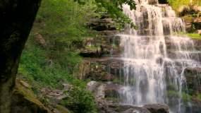 森林中的瀑布视频素材