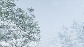 4k唯美大雪纷飞下雪雪景视频素材