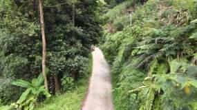 航拍山间小路 茶山视频素材