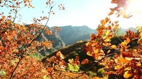 秋景视频素材