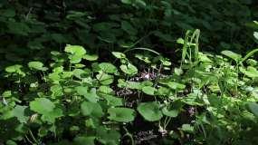 早晨的花、草、阳光、树林、蚂蚁和小蘑菇视频素材