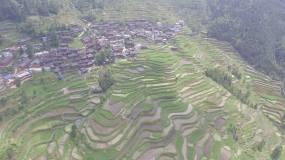 黎平 侗族 梯田景观 传统村落 侗寨视频素材