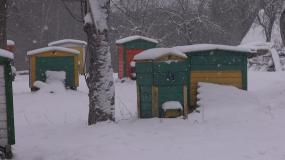 冬天的蜂箱视频素材