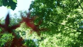 树叶空镜视频素材