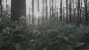 森林里的花视频素材