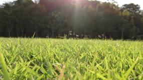 阳光绿草地视频素材