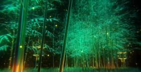 竹林萤火虫夜景竹子粒子光视频素材