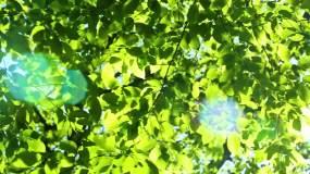 树叶阳光3视频素材