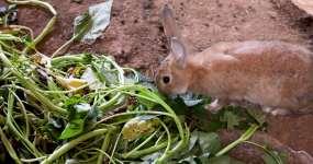兔子养殖视频素材
