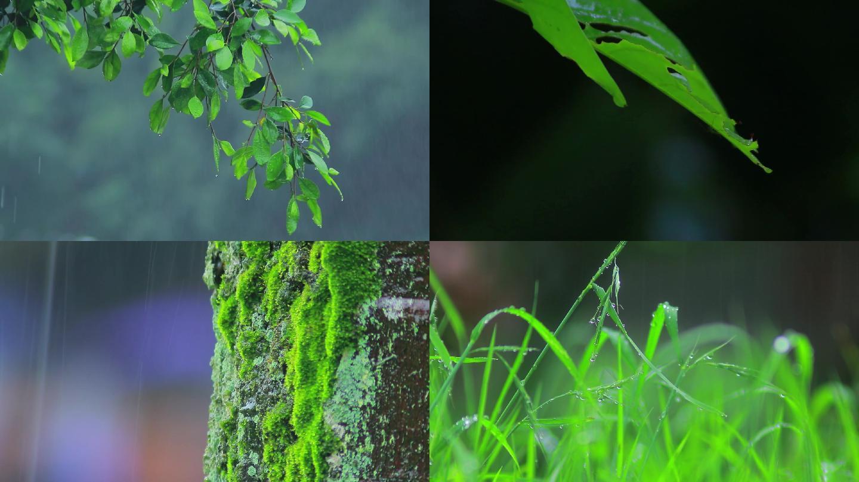 下雨天/雨中树林/树叶雨水滴