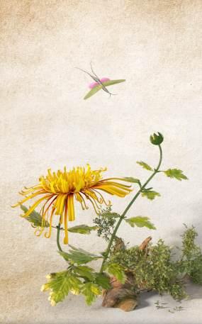 花朵开放动画视频素材