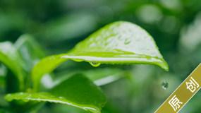 下雨微距绿色植物树叶花朵雨滴升格视频素材