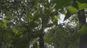 海南热带雨林植物透过树叶光影视频素材